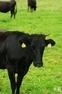 黒毛和牛の旅③